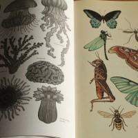 Katie Scott - Das Museum der Tiere: Posterbuch